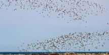 The Bird Sanctuary